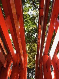 What I saw when I looked up as we passed through all the torii!