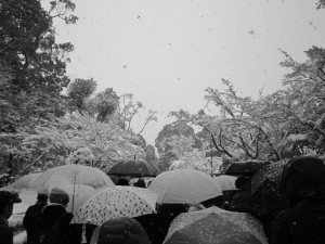Some of the many snow-covered umbrellas of the people waiting in line for Kinkakuji