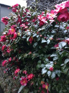 Seeing flowers dusted in snow was so special