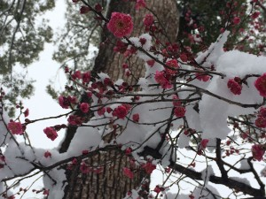 I thought these flowers in the snow were really beautiful
