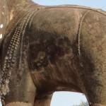 elephant scuplture