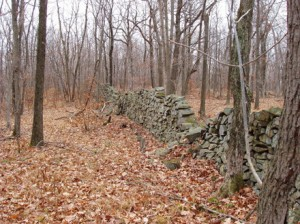 Figure 1. A Stonewall in Connecticut woods. (Source: www.stonewall.uconn.edu/Classification.htm)