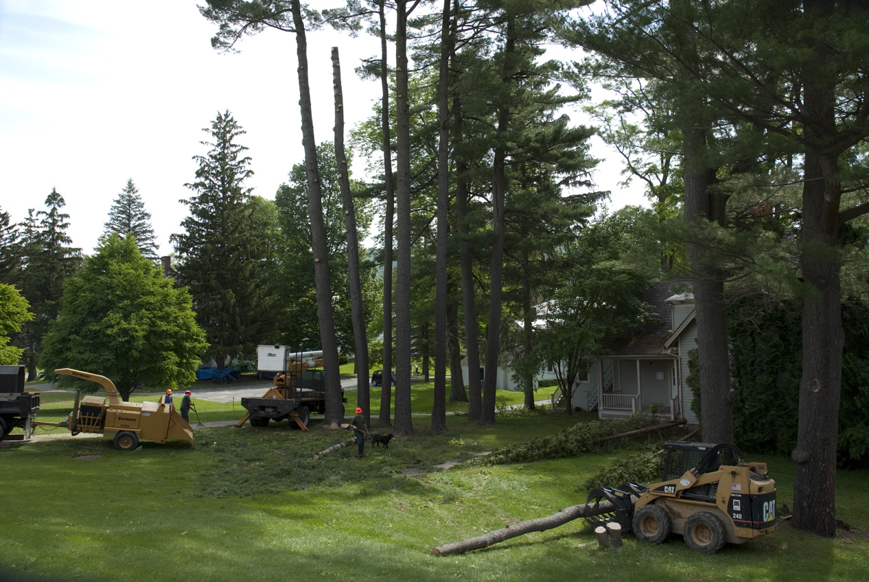 Tree removal kellogg building project publicscrutiny Image collections