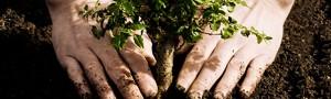 Tree-planting-51