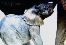 Lenny's Elephant Family