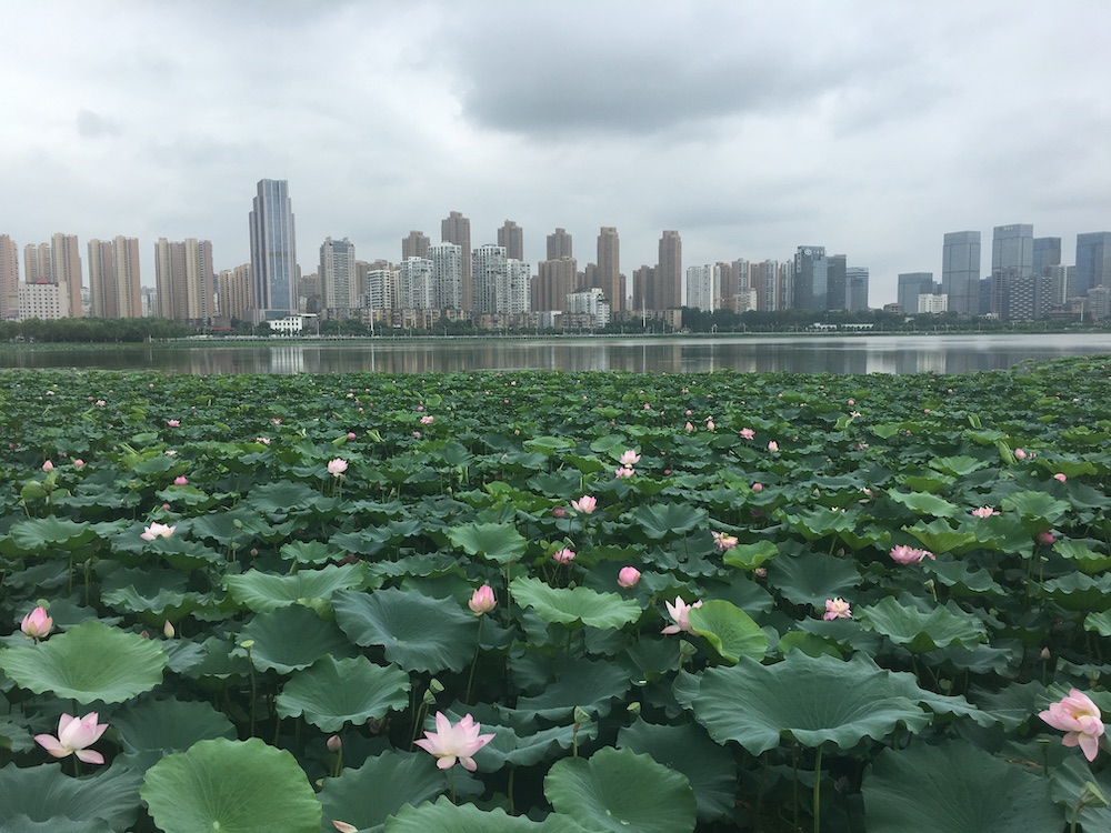 Lamenting my privilege in COVID-19: Thoughts of a student from Wuhan