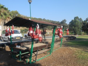 One day's worth of pottery bags adorning the beams of the picnic tables of Kfar Szold